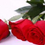 दुई करोड ५० लाखको गुलाब