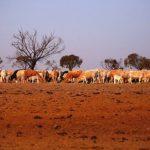 अस्ट्रेलिया: 'खडेरीपीडित किसानलाई राहत'