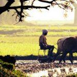किसानको पनि अब वर्गीकरण, यसरी बाँडियो आठ तहमा