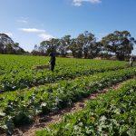 दक्षिण अष्ट्रेलियामा उदाहरणिय बन्दै नेपाली समुदाय,सुरु गरे प्रविधियुक्त सामूहिक तरकारी खेती (फोटो/भिडियो)