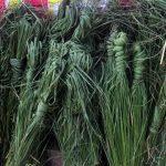 देवकर्म र पितृकर्म दुबैमा अनिवार्य वनस्पति कुश: यस्तो छ कुशको धार्मिक महत्व