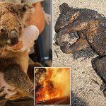 विनाशकारी डढेलो: न्यू साउथ वेल्समा संकटकाल,हालसम्म ४८ करोड जनावर मरे